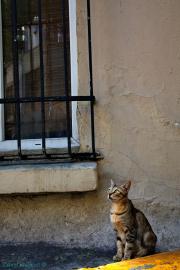 Cat looking for bird