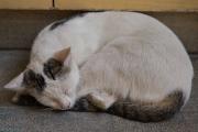 Topkapı Palace Cat