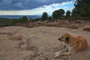 Dog overlooking Gallipoli