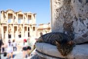 Cat at Ephesus